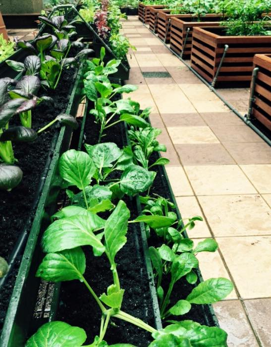 How to grow your own greens in Singapore